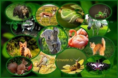 викторина про животных